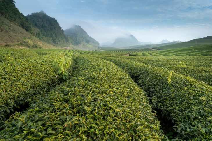 Voor mijn dagelijkse kopje thee in de middag kies ik graag een thee met een lekkere smaak. Regelmatig vervang ik ook 's avonds de wijn door thee en dat bevalt me uitstekend! En wat denk je van thee bij je diner?